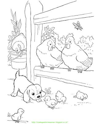 Gambar Mewarnai Ayam - 11