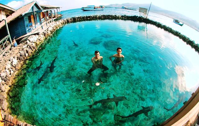 Kepulauan%2BKarimunjawa%2BBerenang%2BBersama%2BHiu Kepulauan Karimunjawa Destinasi Bahari Penuh Pesona, yang Mendunia