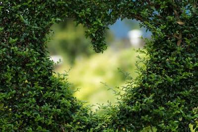 heart shape by bush
