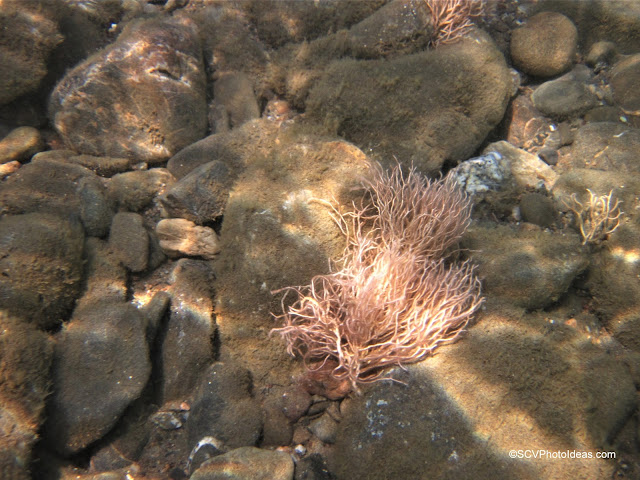 Sea Anemone clinked on seabed