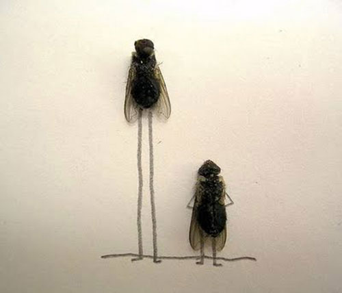 Hình ảnh vui về những chú ruồi