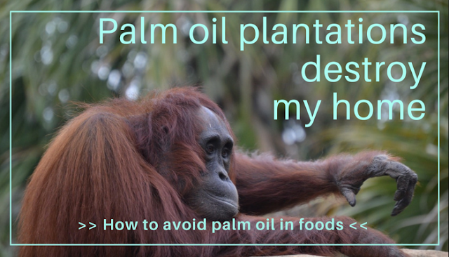 Avoiding palm oil in foods helps save the habitat of creaures such as ourang-outangs