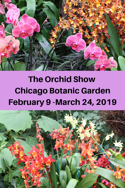 The Orchid Show Returns to Chicago Botanic Garden February 9, 2019-March 24, 2019