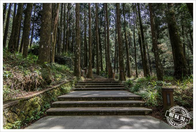 阿里山森林遊樂區-櫻花森林浴-3