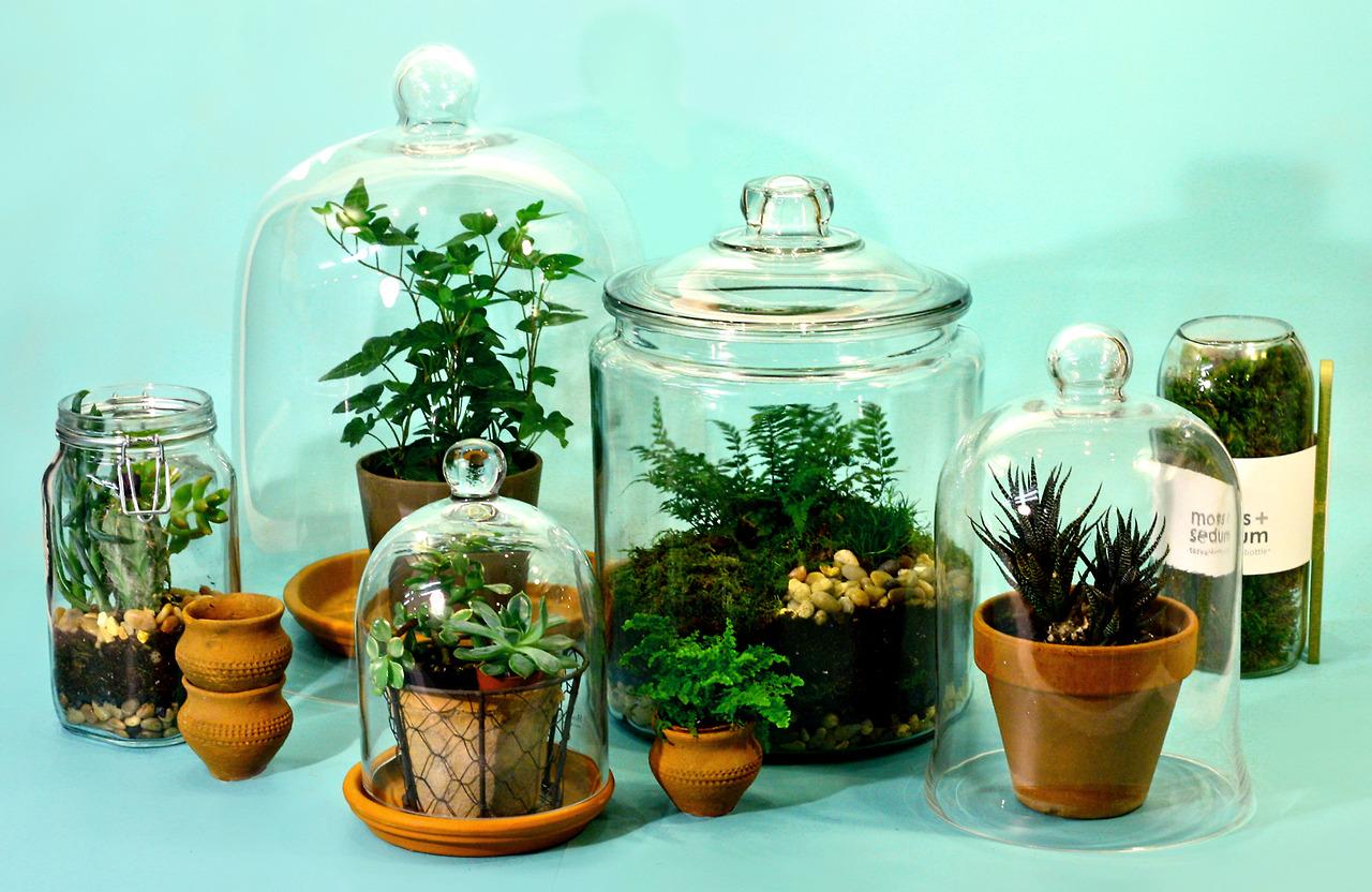 glass plants, plants, cacti, tumblr, pinterest, pastel, pastel blog