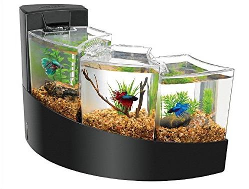Aquarium Mini untuk Ikan Cupang - Budidaya Ikan Cupang