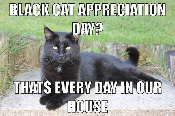 With Hook And Needle Black Cat Appreciation Day