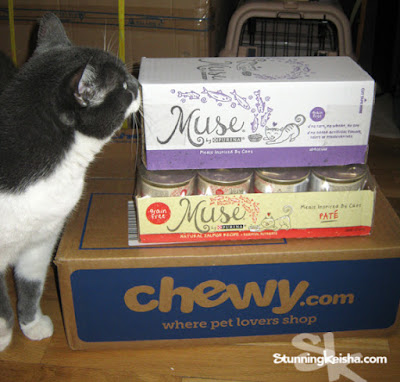 I Am TW's Muse So She Feeds Me Muse Cat Food. #ChewyInfluencer