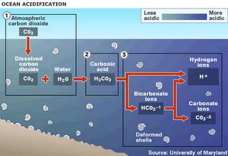 asidifikasi samudera
