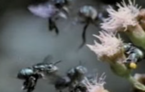 Sting Operation: Illegal Aliens Attacked by Bees Rescued by U.S. Border Patrol Agents