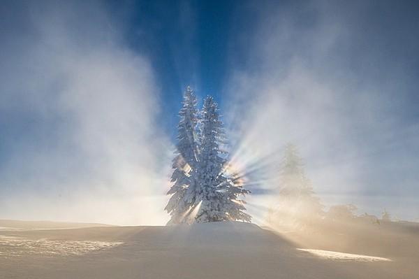 Sun from pine by Igor Isanovic
