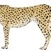 Por que os maiores animais não são os mais rápidos?