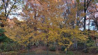 Franklin fall foliage photos