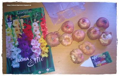 Blumenzwiebeln Gladiolen Mix