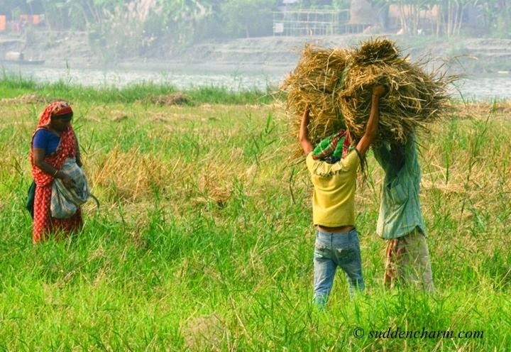 bangladesh wallpaper 2014 - photo #44