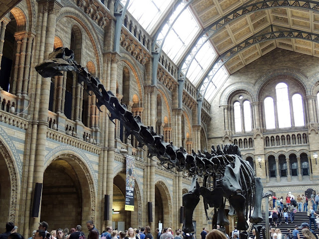 dinosaur skeleton, remains, fossil