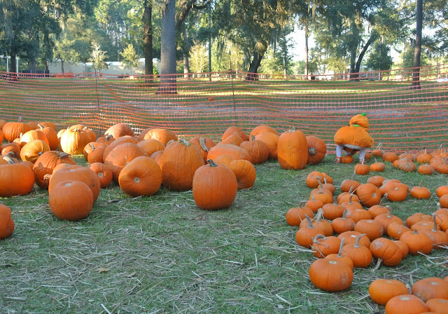 Pumpkin Patch, Jacksonville, Fall