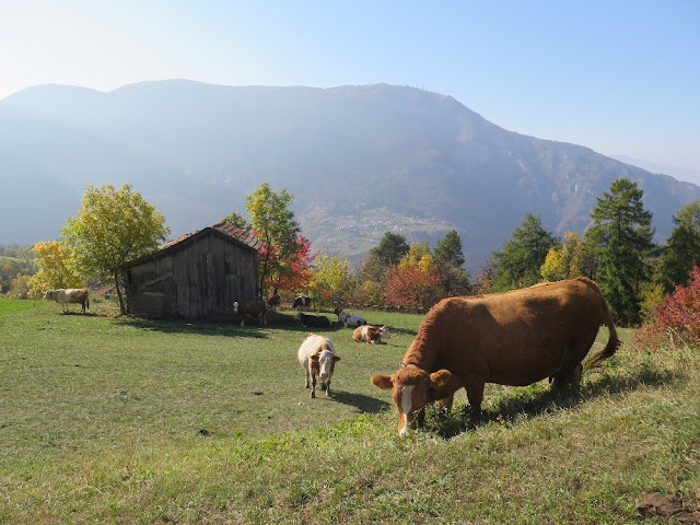 alpe cimbra autunno