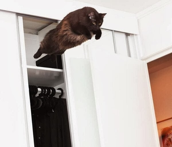 Funny cats - part 88 (40 pics + 10 gifs), cat perfectly timed photo jumping from closet