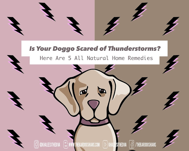 Is Your Doggo Scared of Thunderstorms? Here Are 5 All Natural Home Remedies
