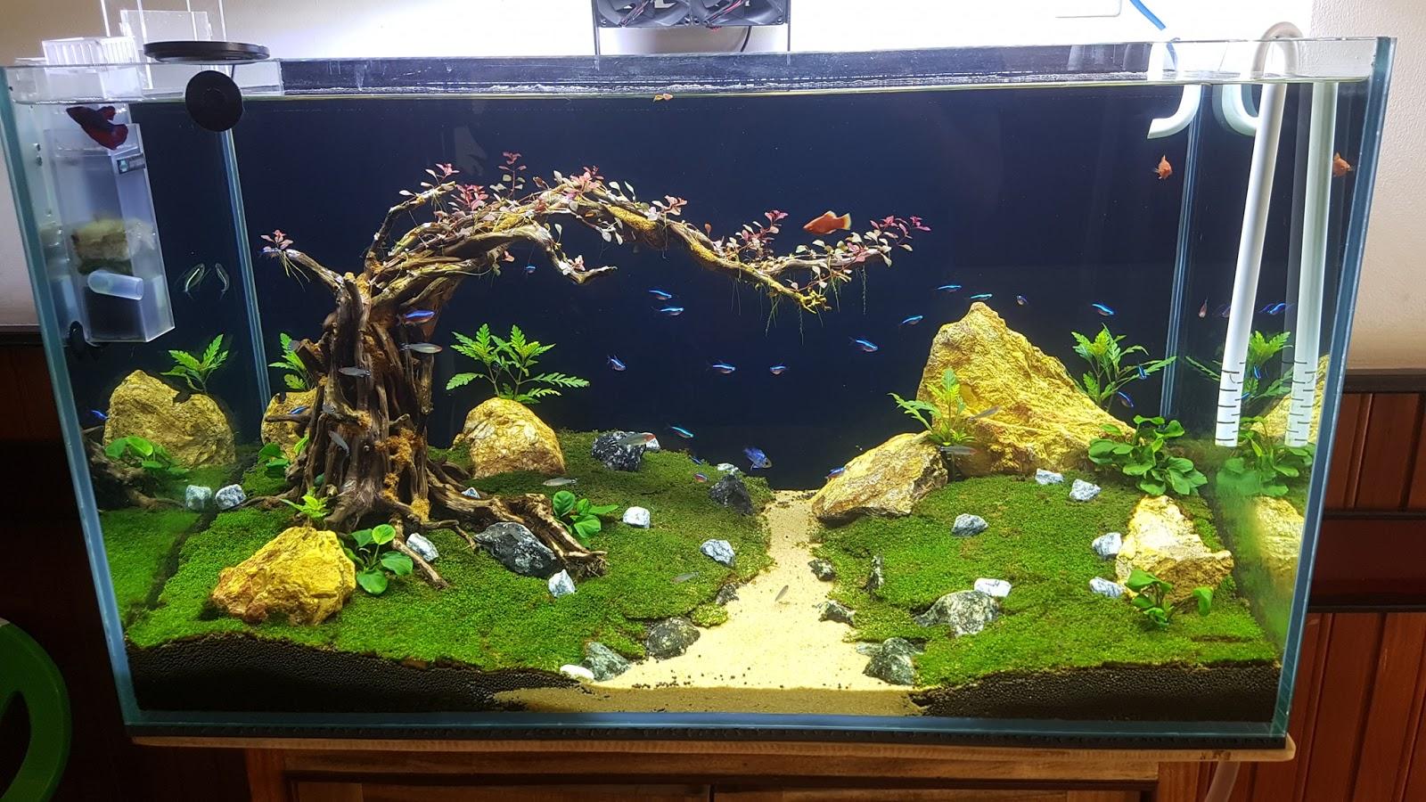Hồ thủy sinh chơi rêu mini fiss của bạn Anhvu Nguyen