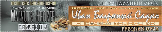 Купить саженцы грецкого ореха Садко, 0957351986, 0985674877, Walnuts Broker