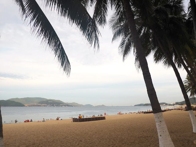 Palm trees by the sand at Nha Trang beach, Vietnam