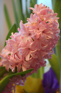 Focus on life: The beauty of flowers: The Hyacinth :: All Pretty Things