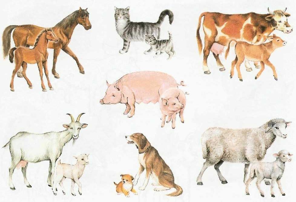 Картинки по запросу лексическая тема домашние животные