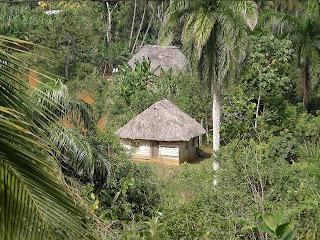 Bei Baracoa, Kuba, kleine bäuerliche Hütte, Dach mit Gouano (getrockneten Palmwedeln) gedeckt.