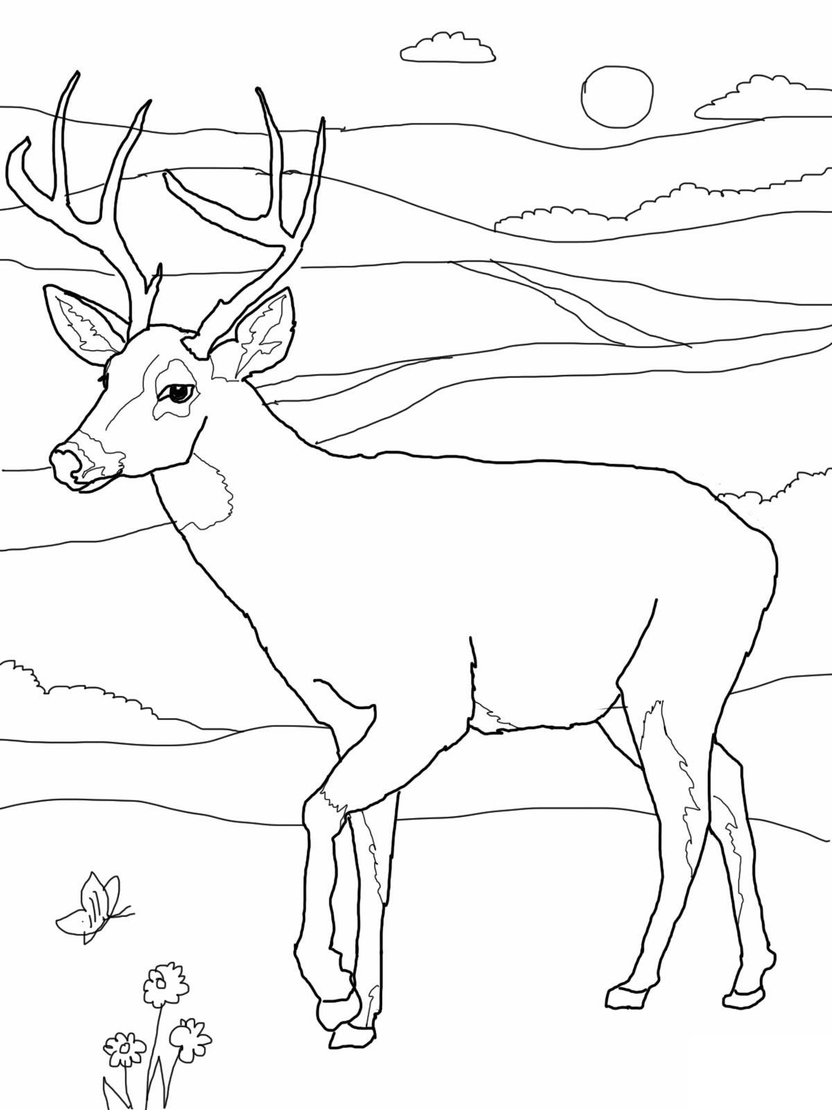 Kumpulan Gambar Kartun Binatang Rusa