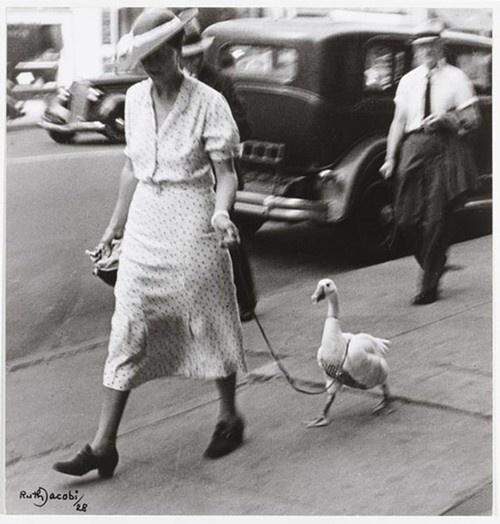 Woman walking a duck