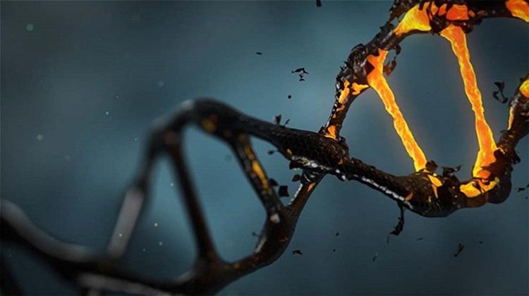 Dados de DNA antigos preenchem milhares de anos de movimento humano e adaptação genética na África