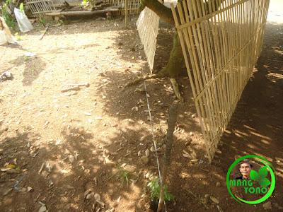 Pagar bambu belum dipasang.