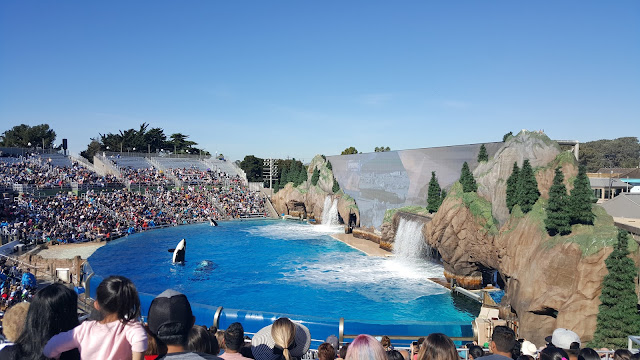 sea-world-whales