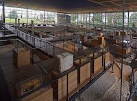 vesunna périgueux musée galloromain