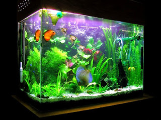 Jenis-Jenis Aquarium Berdasarkan Fungsinya