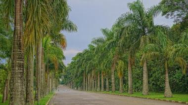 Jardín Botánico de São Paulo en el Bosque Atlántico de Brasil