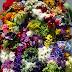 El 74 % de las flores para la celebración de San Valentín serán colombianas
