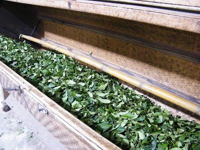 鹿谷冬茶製作