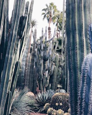 Egzotyczne rośliny