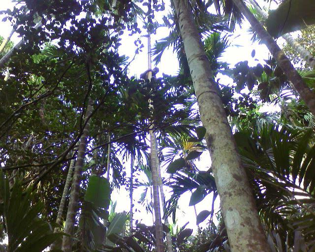 человек на пальме
