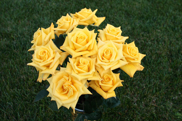 yellow-roses-bouquet-images