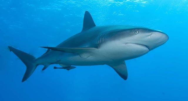 تفسير رؤية القرش في المنام 2018