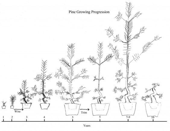 bonsai teknikleri