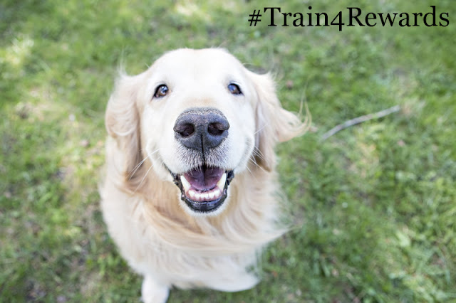 Add your photo to the #Train4Rewards photo post to show you use reward-based training methods with your pet.