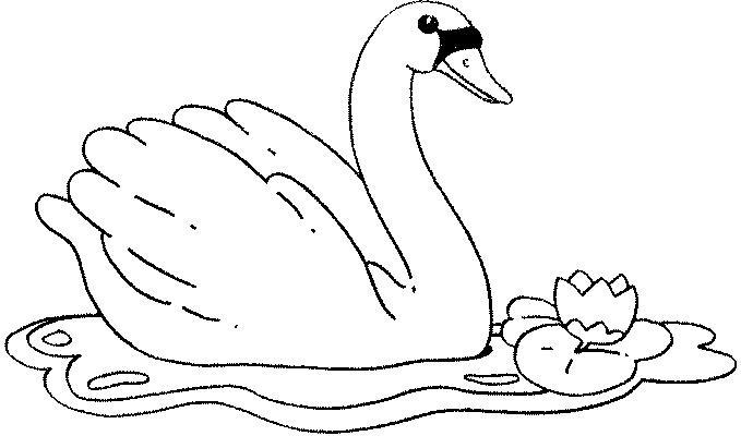 Dibujos De Patos Para Colorear Para Niños: Dibujos Para Colorear De CISNES