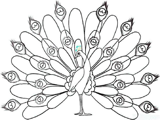 Mewarnai Gambar Burung Merak - 8