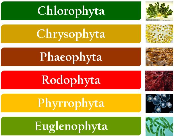 Pengertian Protein Contoh Struktur Sifat Bentuk Jenis Fungsi Denaturasi Renaturasi Kimia Protein adalah polimer biologi yang tersusun atas molekulmolekul