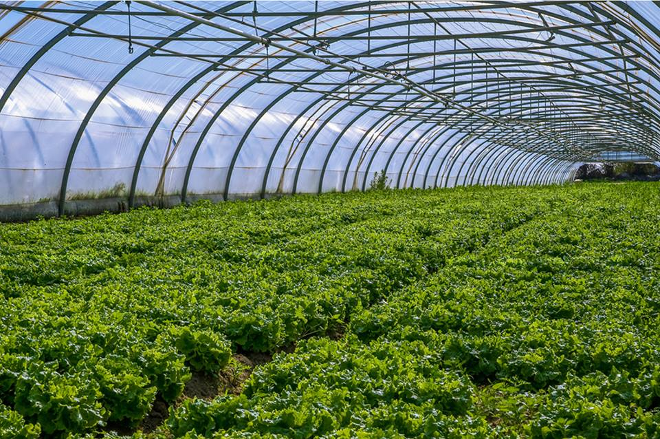 technological innovations in indian agriculture Advanced tech from israel to help indian farming  major seed and agri  technology companies launched alliance for agri innovation (aai), which they  said.